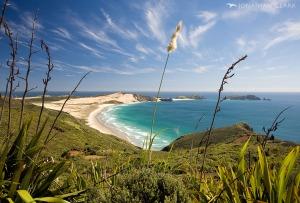 new-zealand-aotearoa-seaside-summer-cape-reinga-northland-flax-ocean
